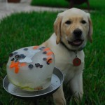 All-Natural Dog Food For A Healthy And Happy Pooch
