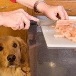 How To Make Natural Homemade Meals For Your Canine Pets