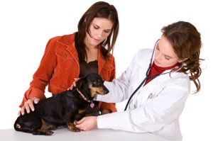Dog Kidney Failure