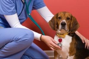 Murmur in Dogs