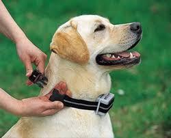 Dog Bark Collar