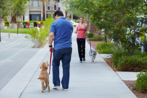 Dog Leash Training