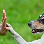 Simple Dog Commands