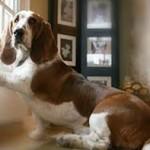 Understanding Tape Worms In Dogs