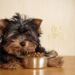 How To Select Appropriate Dog Food For Puppies