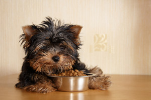 dog food for puppies
