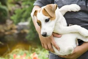 natural treatment for dog worms