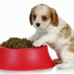 Puppy Worming Information