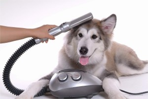 Dog Dryer