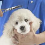 Dog Shears
