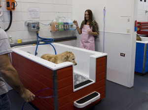 Self Service Dog Wash