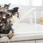Bath Dogs At Home