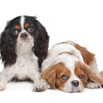 Canine Diabetes - How to Take Care of a Dog With Diabetes