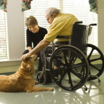 What Is Therapy Dog Training?