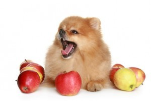Best Dog Food Brand