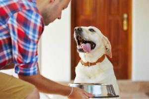 Compare Dog Food