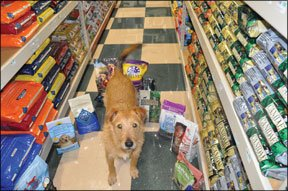 Dry Dog Food Reviews