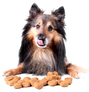 Who Makes The Best Dog Food