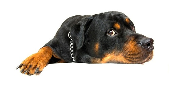 Dog Health Care Questions