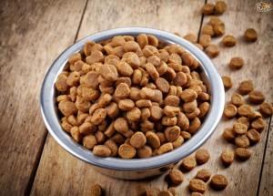 Dog Food Ratings