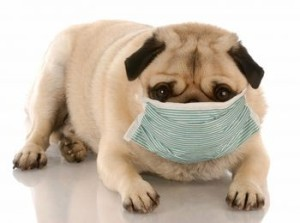 Dog Health Problems