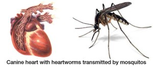 Heartworm Medication