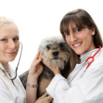 Pet Care Insurance – Buying the Best Pet Insurance