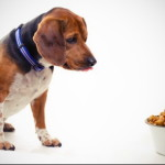Pet Food: What You Need To Know About The Product