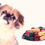 Pet Vitamins Supplements for Your Dog