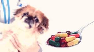 Pet Vitamins Supplements