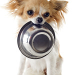 Tips To Find The Best Dog Foods