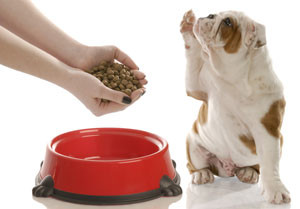 Diet For Dogs With Cancer