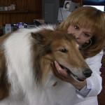 Dog Health Questions Symptoms