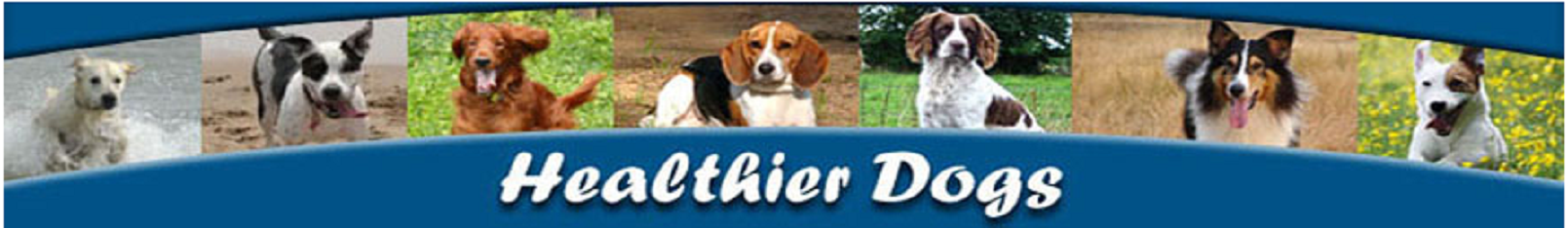 Best Dog Foods and Holistic Dog Health Remedies | HealthierDogs.com