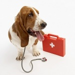 First Aid for Your Dog