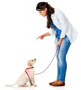 Basics Dog Training