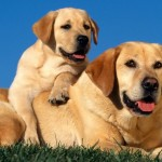 Natural Dog Food Is The Best For Your Dog