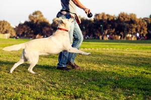 Basic Dog Training Command