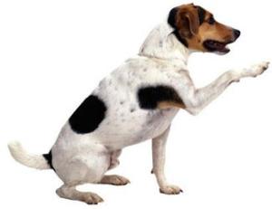 dog bahaviors