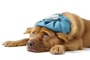 Common Dog Health Problems