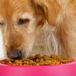 What Exactly Does Commercial Dog Food Contain?