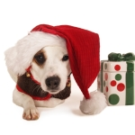 Holiday Gift for Pet