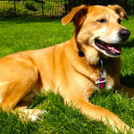 Identify and Prevent Dog Health Problems Before They Develop