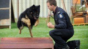 Guard Against Dog Attacks