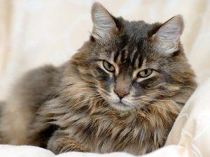 cat urine odor removal