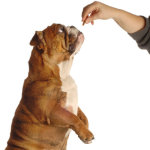 Dog Treats – Should You Make Them Yourself?