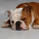 Pet Food: Make Sure You're Getting The Best Quality