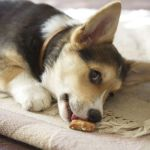 Dog Information: Bones And Raw Food Are A Good Nutritional Choice