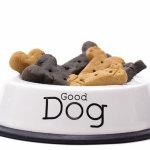 Dog Treats – Healthy And Tasty
