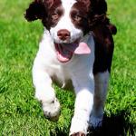 Dog Food – Some Interesting Information